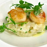 Seared scallops with smoked haddock & pea risotto